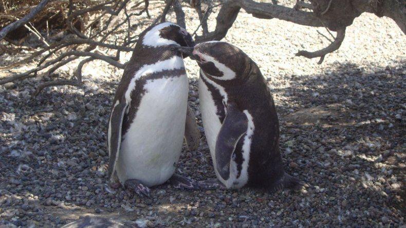 Se analizó con la Cámara de Prestadores la potencialidad del turismo en la Patagonia Central