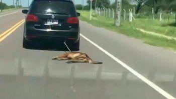 ato a su perro al auto y lo arrastro por varios kilometros