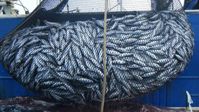 En 2017 las capturas marítimas sumaron 768 mil toneladas