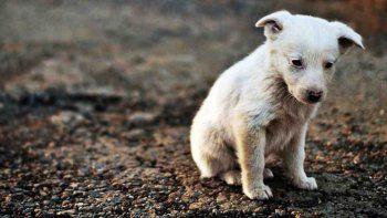 Juntan firmas para exigir esterilización gratuita de perros y gatos en Rada Tilly