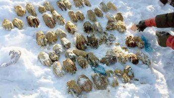 Encuentran 27 pares de manos en un río congelado
