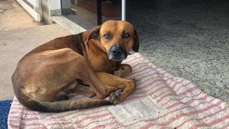 Conmovedor: un perro espera en un hospital a su dueño, quien ya murió