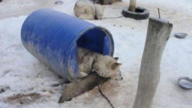 Denuncian maltrato de perros que son utilizados para paseos en trineo