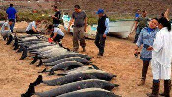 La muerte de 49 delfines en Puerto Madryn genera conmoción en la población