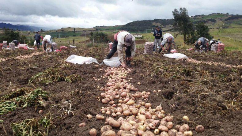 No se salvan ni los productores de papas