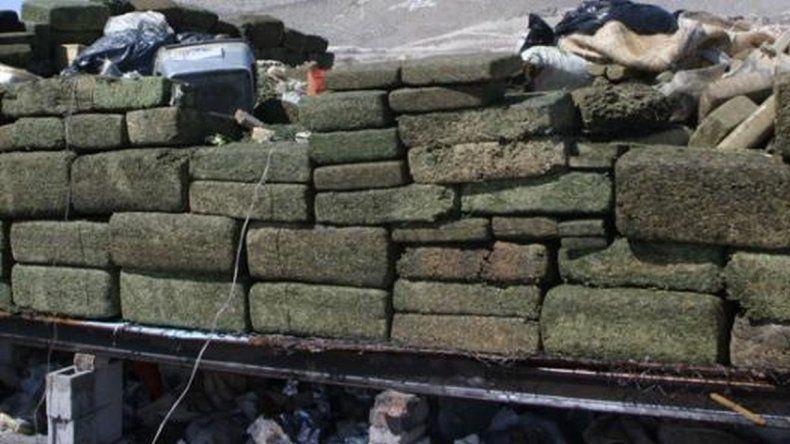 Desaparece media tonelada de marihuana y policías acusan a los ratones