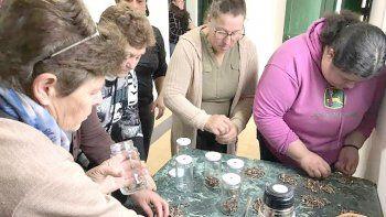 La Agencia Comodoro Conocimiento  brindará cursos de cultivos de  hongos y elaboración de dulces