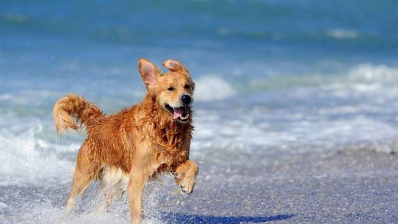 Madryn trabaja en la implementación de una playa pet friendly