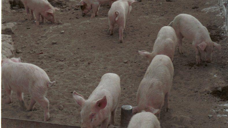 Luenzo le quiere poner un freno a la importación de carne porcina