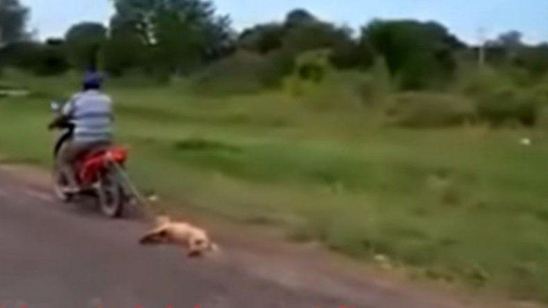 Ató a su perra a la moto y la arrastró por la calle