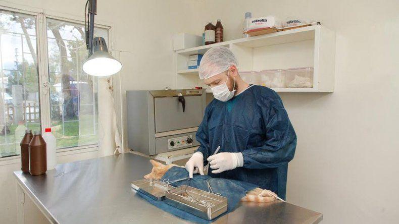 Programa de castración canina y felina en Rada Tilly