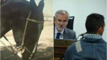 caso muneco: el caballo tuvo sufrimiento innecesario