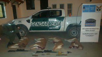 Gendarmería secuestró guanacos faenados y varias armas de fuego