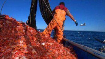 Chubut y Santa Cruz buscan consenso para repartir el cupo de langostino