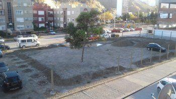 Vecinos de Las Torres piden que no saquen un árbol de 20 años