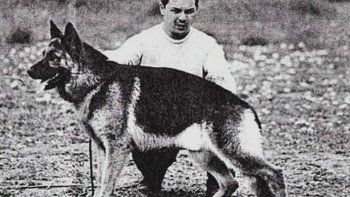 La increíble historia de por qué se celebra hoy el Día Nacional del Perro