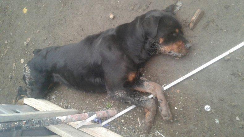 En Río Gallegos denuncian que quieren capturar y matar perros