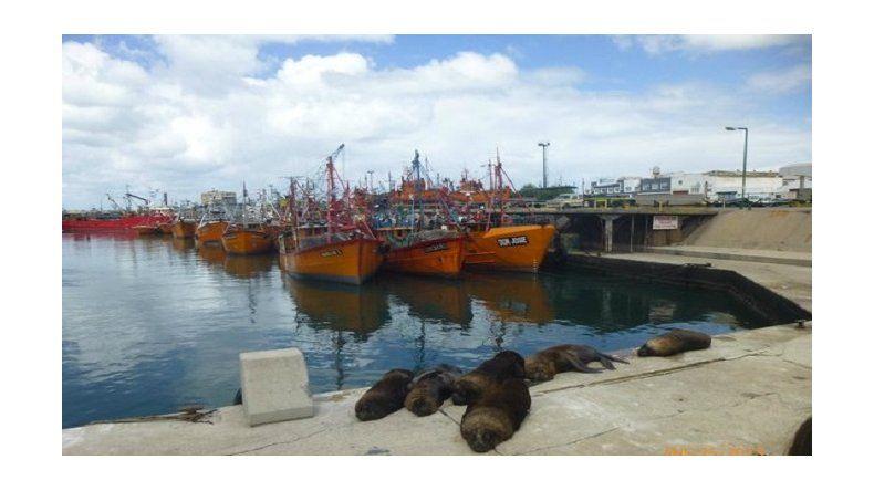 Paran el puerto en Mar del Plata