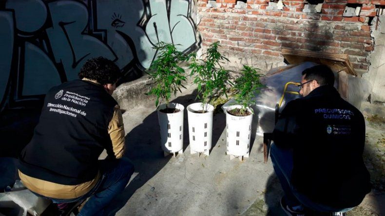 Desarticularon a los Masterchef: cultivaban marihuana gourmet