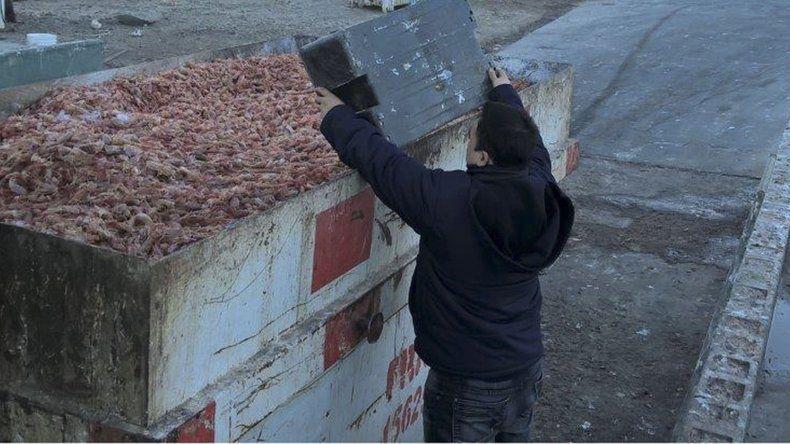 El Servicio Nacional de Sanidad y Calidad Agroalimentaria decomisó 20 toneladas de filet de merluza y 100 kilos de langostinos en Comodoro Rivadavia.