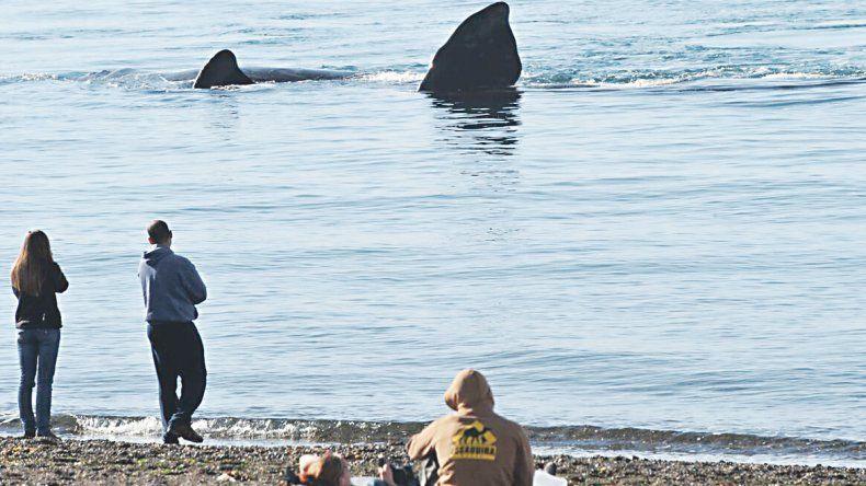 Las ballenas llegaron a Madryn