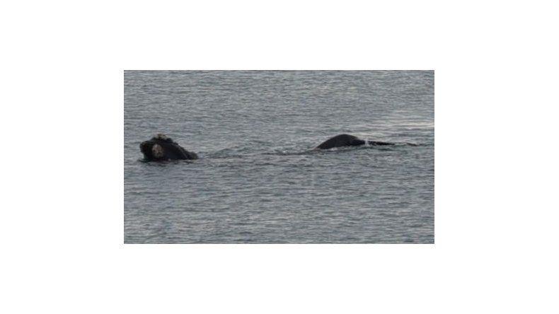 Se lo tragó una ballena y vivió para contarlo