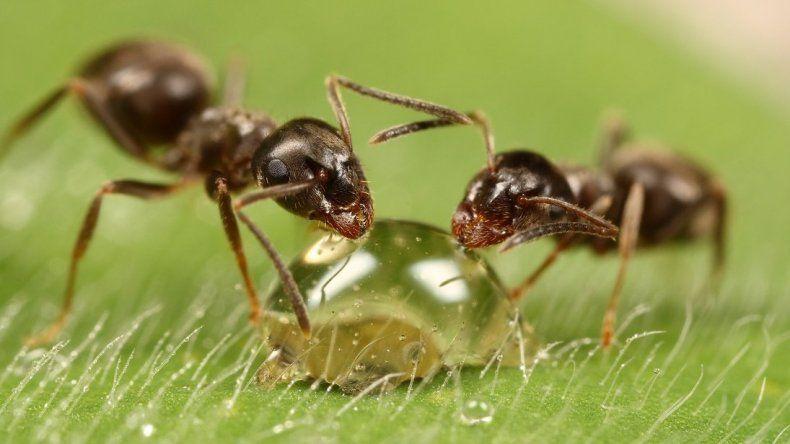 Así es la cara de una hormiga en HD
