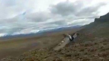 liberaron un condor en el maiten luego de una curacion exitosa