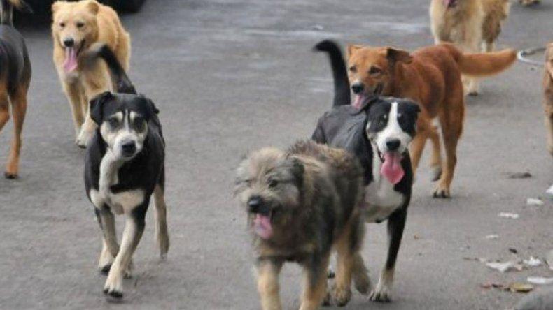 Convocan a una reunión para resolver la problemática de los perros callejeros