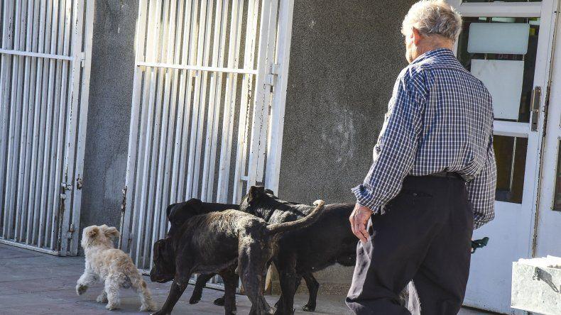 El ataque de la semana pasada motivó el resurgimiento de la preocupación en el Concejo por los perros sueltos en las calles.