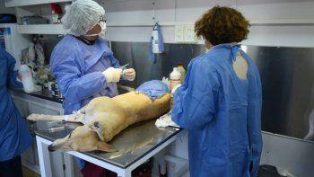 La castración se ha implementado como política oficial, pero es solo un eslabón en la tenencia responsable de mascotas.