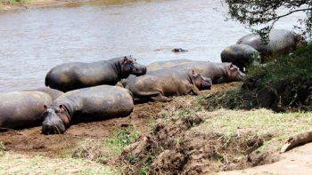 Sacaba la foto de un lago y un hipopótamo lo mató
