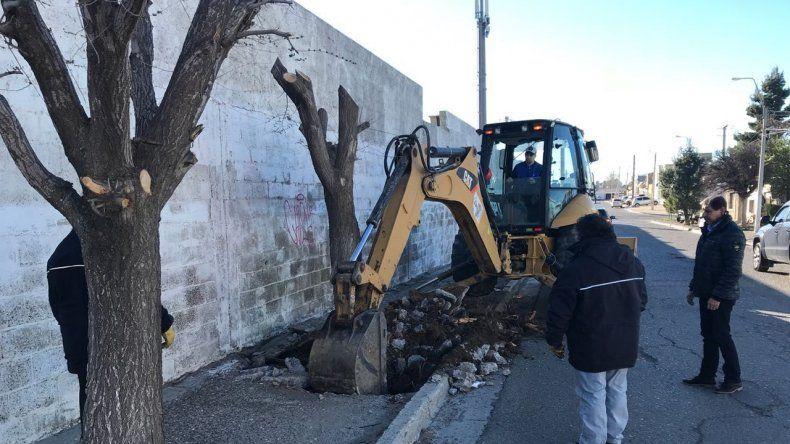 La tarea de extracción de árboles en una de las calles que circunda el Cementerio Oeste.