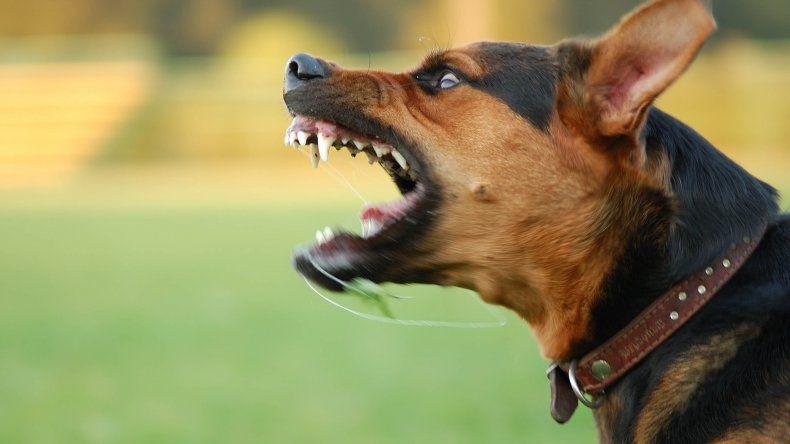 Perro mordió y desfiguró a una nena de 5 años
