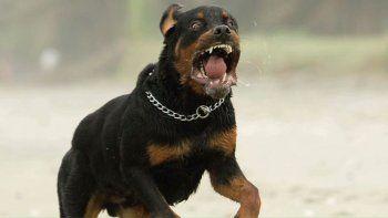 bebe murio por el feroz ataque de dos perros de su abuelo