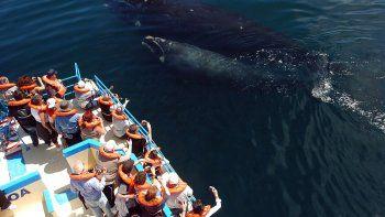transmitiran una nueva vigilia de pingüinos y ballenas