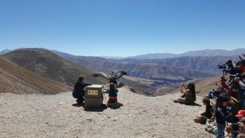 liberan a un condor andino que fue encontrado con esquirlas de plomo