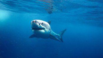 tropezo dentro de un tanque lleno de hambrientos tiburones