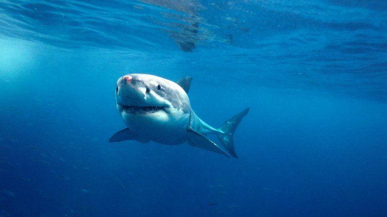Tropezó dentro de un tanque lleno de hambrientos tiburones