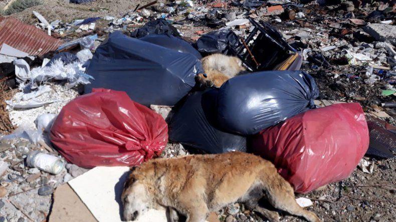En la escombrera de KM 17 aparecieron más de 20 perros muertos