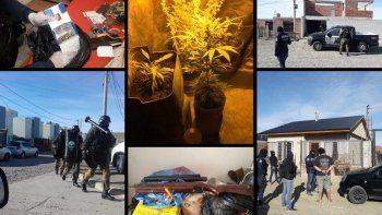 plantines de marihuana, armas y tumberas descubiertos en ocho allanamientos