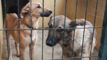 una medida judicial frena el retorno de la perrera