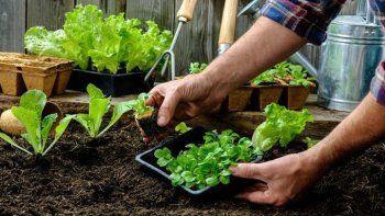 entregan kits de semillas para sembrar huertas en las casas