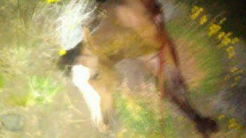 atropellaron a un caballo cerca de diadema