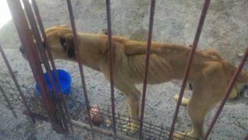 La Justicia actuó de oficio y rescató a tres perros desnutridos