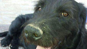 Rescataron a un perro que era violado por su dueño
