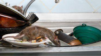 Salud: en Rada Tilly limpian los espacios públicos para combatir la plaga de roedores e insectos