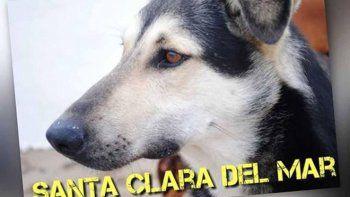 roba ojotas: el perro mas temido de las playas de santa clara