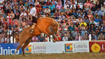 jesus maria: polemica por la muerte de un caballo en competencia