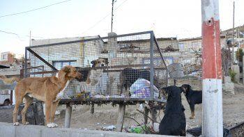 La cantidad de perros sueltos continúa siendo una problemática irresuelta en Comodoro.